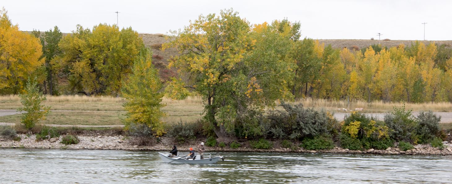 Fly fishing, Bighorn River, Fall Colors, Fly fishing, Bighorn RIver fly fishing, Bighorn River Fishing reports, fishing reports